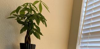 plant on piano minimalist decor