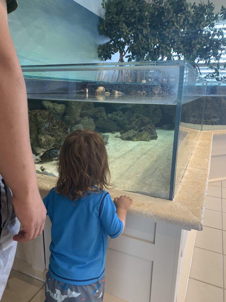 Miami fish tank